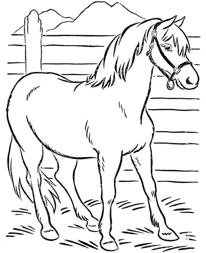 Omaľovanka - kôň - 1