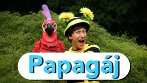 Smejko a Tanculienka: Papagáj (pesnička)